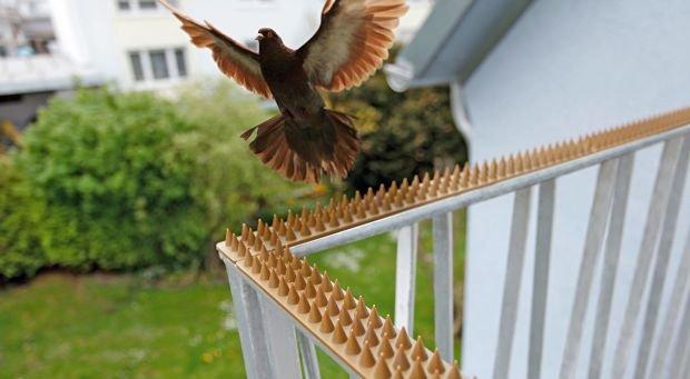 Kolce odstraszajace ptaki